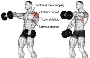 Front Raises exercise for shoulder workouts