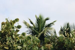 Take photos of nature with green backgrounds