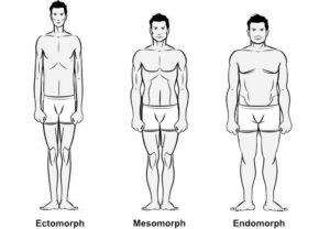 Three Main Male Body Types